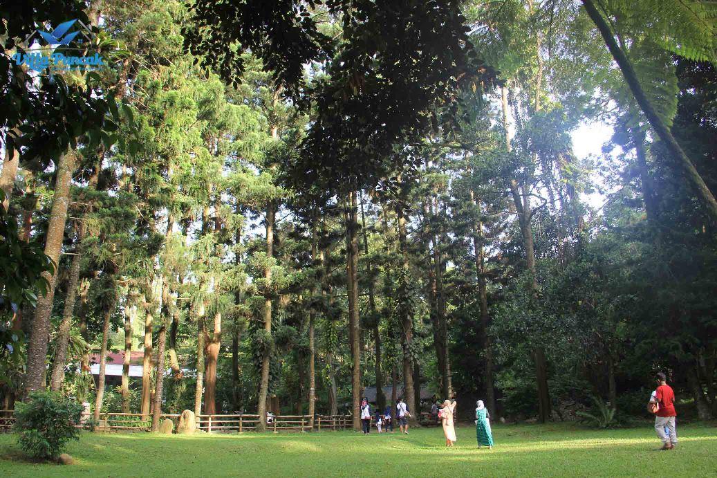 Hutan pinus Cimory Riverside