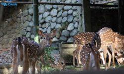 Masuk ke Hutan Cimory Puncak Cuma 15 Ribu, Bisa Berinteraksi Langsung dengan Binatang-binatang Lucu