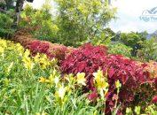 villa-banny-flowers-house-puncak-14